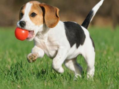 Puppy training Bristol